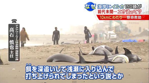 0190_Ibaraki_hokota_iruka_uchiage_201504_b_08.jpg