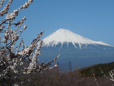 岩本山(2)