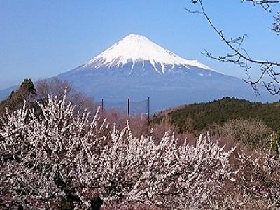 岩本山(3)