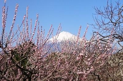 岩本山(4)