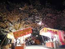 三島夜桜(16)