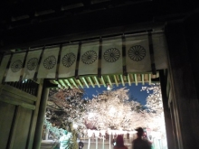 三島夜桜(20)