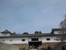 ひこにゃん(3)