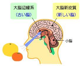 大脳新皮質