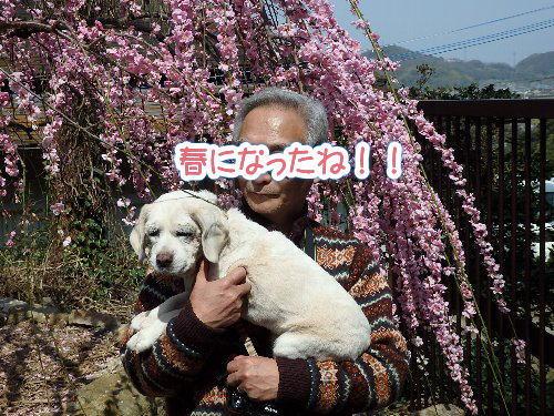 2015・03・21綾部梅林8