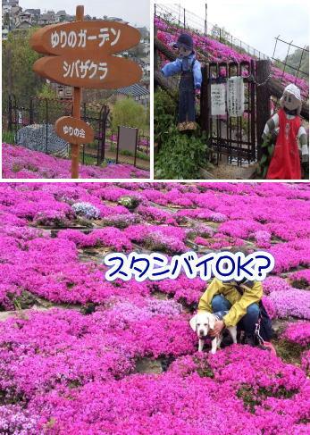 2015・04・19ゆりのガーデン1