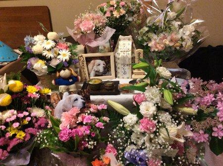2015・05・11お花畑