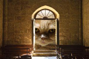 猫 訪問 ドア