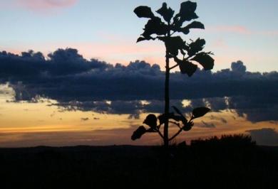景色 夕暮れ サンセット
