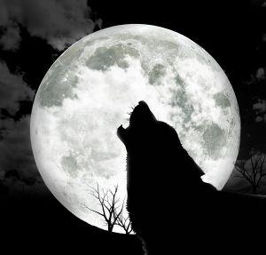 月 真夜中