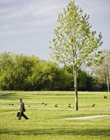 樹木 ツリー 公園