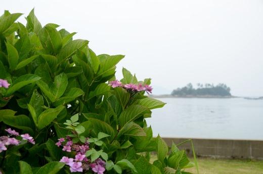 海と紫陽花