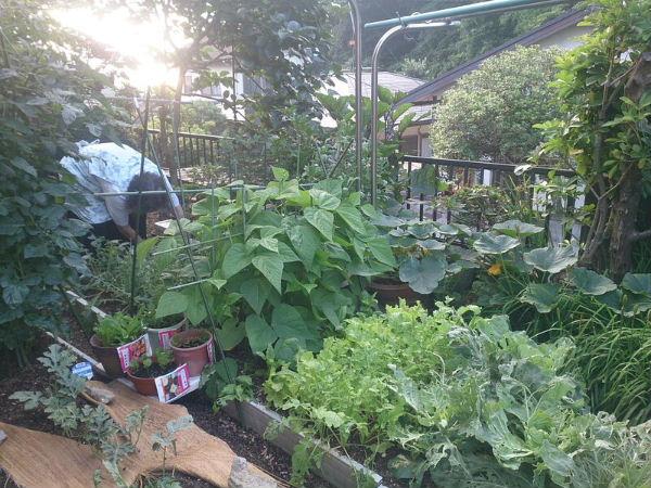 義父の家庭菜園