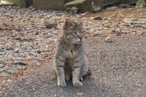 P5048428キジ猫