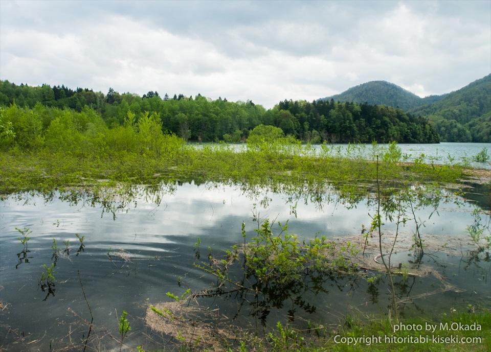 水辺で植物が見える岩尾内湖