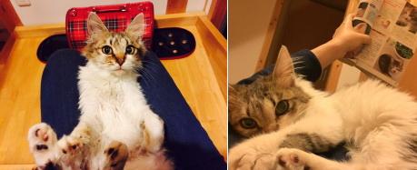 o-cat20150707-1.jpg