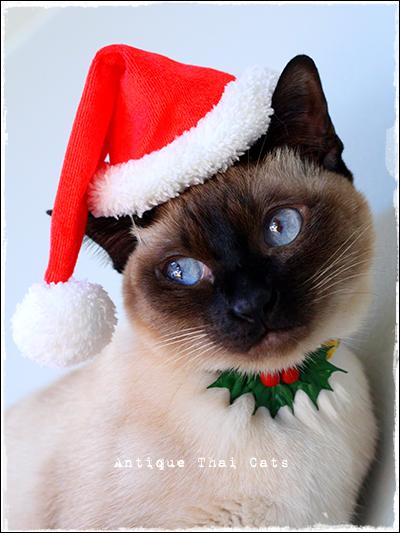 猫首輪 ปลอกคอ แมว cats collar 猫用品 cats goods ของแมว