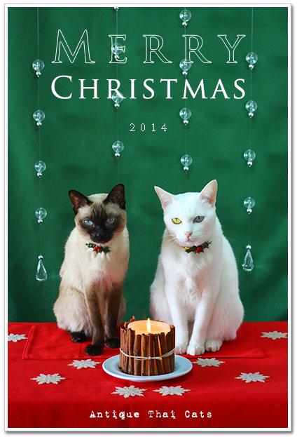 クリスマス คริสต์มาส Christmas 猫 แมว cat 2014