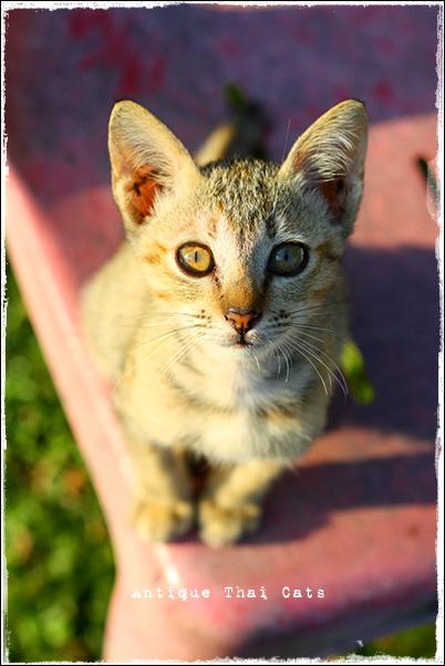 野良猫・Stray cats・แมวจรจัด・ソト猫・地域猫タイ・Thai・ไทยルンピニ公園 Lumpini park สวนลุมพินี