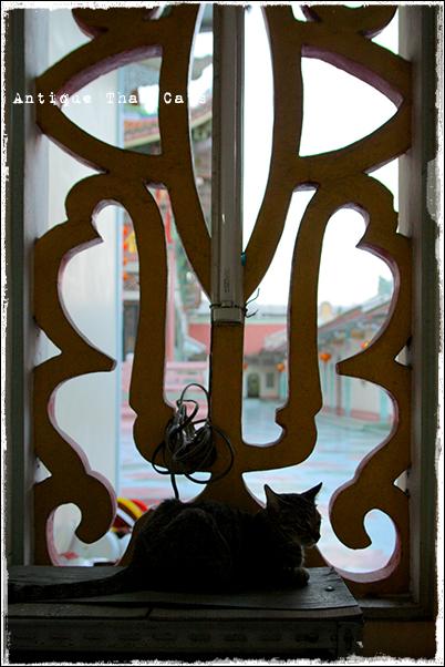 野良猫・Stray cats・แมวจรจัด・ソト猫・地域猫タイ・Thai・ไทย ワットポーメーン วัดโพธิ์แมนคุณาราม Bhoman Khunaram Temple 普門報恩寺 アンティークタイキャット Antique Thai Cats โบราณ