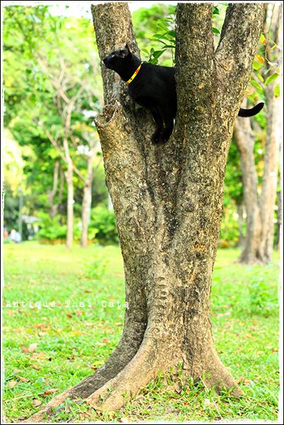 野良猫・Stray cats・แมวจรจัด・ソト猫・地域猫タイ・Thai・ไทยルンピニ公園 Lumpini park สวนลุมพินี アンティークタイキャット Antique Thai Cats โบราณ