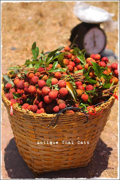 ライチ lychee ลิ้นจี่ 果物 フルーツ Fruit ผลไม้ タイ Thai ไทย