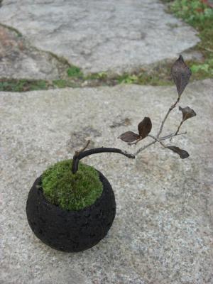 縁活ミニ盆栽