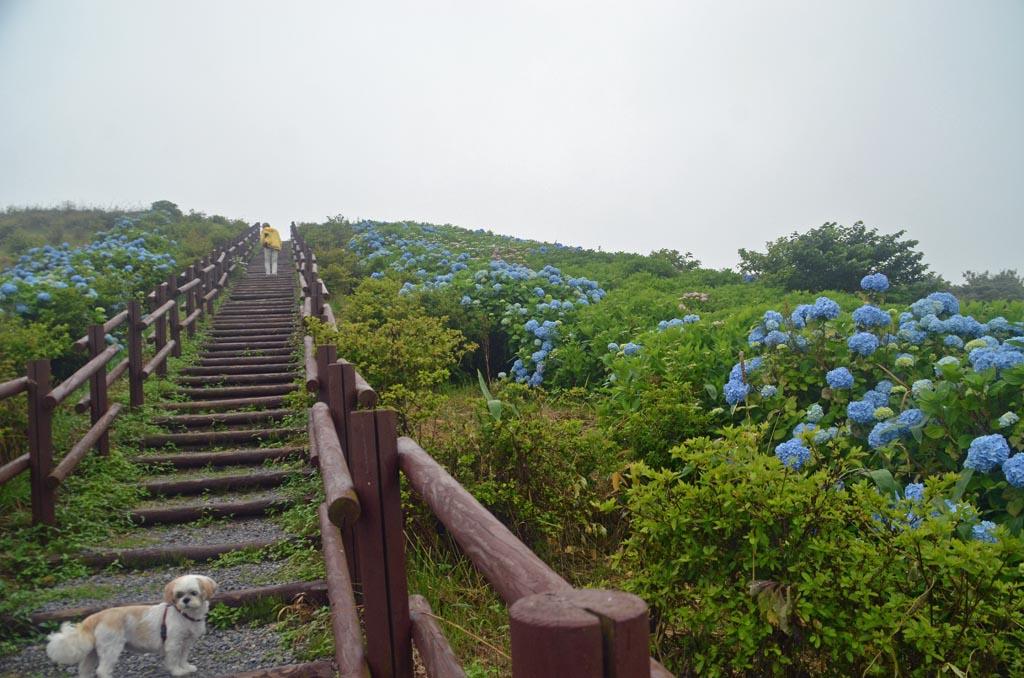 D70_3457奥尻島
