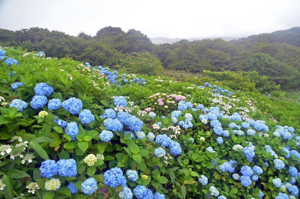 D70_3468奥尻島