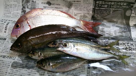 新鮮魚軍団1507