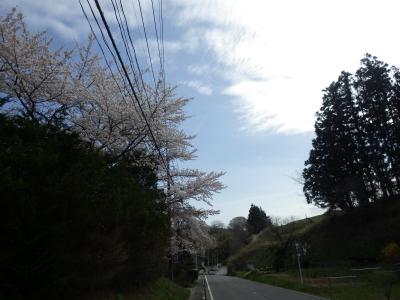 桜めぐり (8)