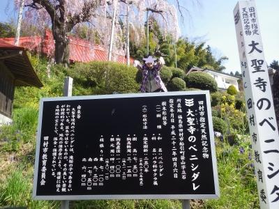 桜めぐり (11)