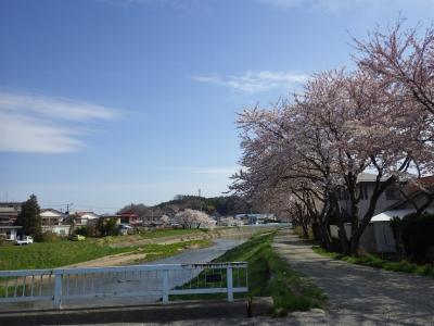 桜めぐり (15)