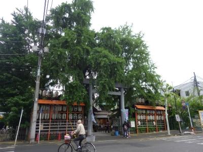 日本ブリッジ (6)