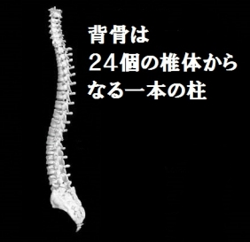 背骨2015411d