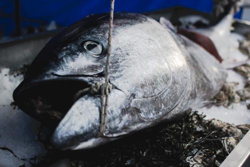 fresh-tuna-on-the-market_449-19322742.jpg