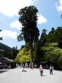 京都27 181