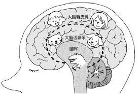 大脳の新旧皮質