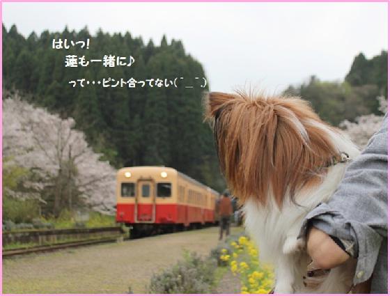 リベンジ来年ね!(^o^)