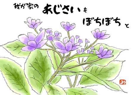 アジサイ紫ss