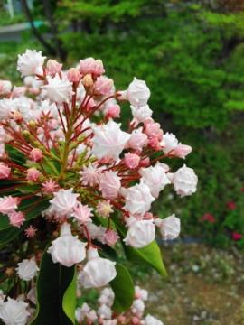 flower 0506-2