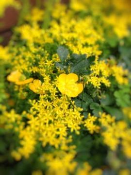 flower 0516-2