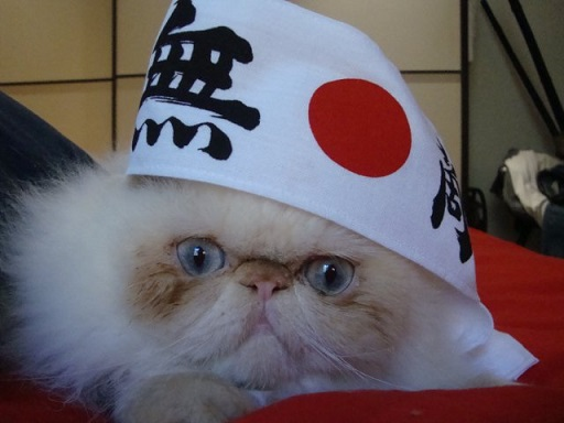 Like-Some-Cat-From-Japan-2.jpg