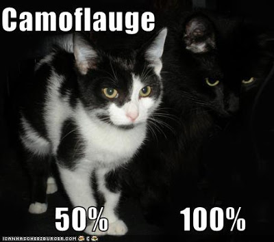 funny-pictures-cats-have-camouflage.jpg