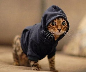 pet-hoodies-300x250.jpg