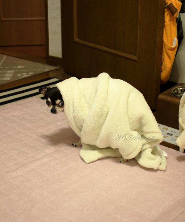 貞子じゃありません。 ワタシはランです。