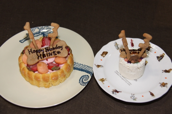 IMG_0044ケーキ13歳