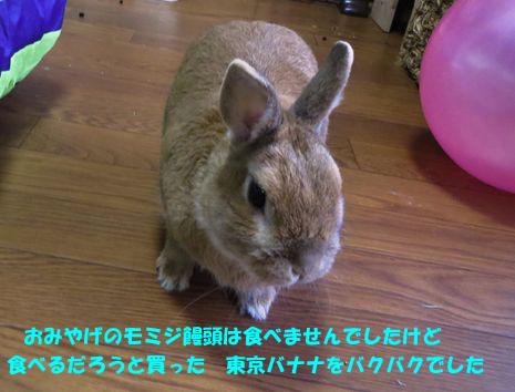pig 20150422