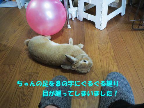 pig 20150426