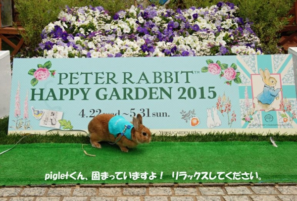 PETER RABBIT 2015 001